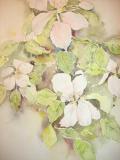 appelbloesem, aquarel
